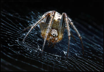 ...one more spider. by LeckerHamster