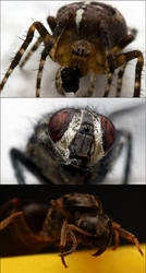 Insect Macros II by LeckerHamster