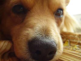 Dog by Stanishko