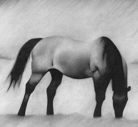 horse charcoal
