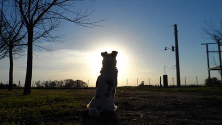 Farewell, Sun by Tigreperro