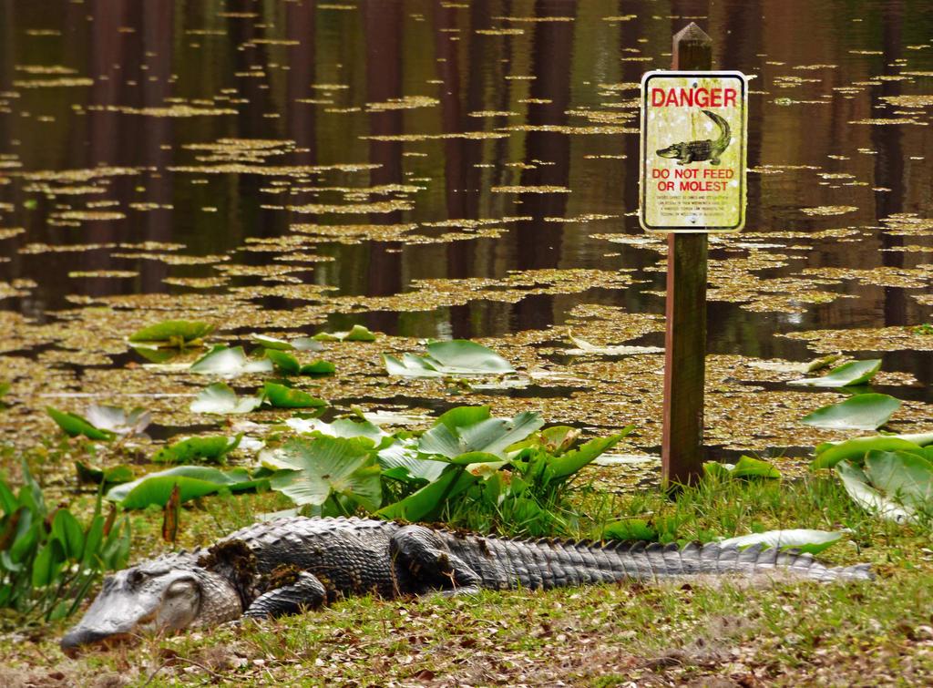 Smart Gator by cannedhubris
