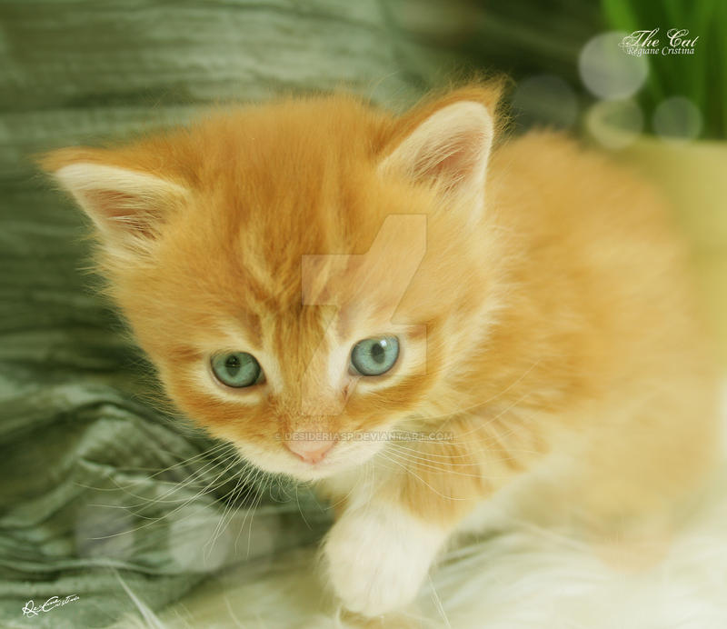 What to give a teething kitten