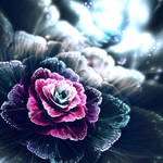 Rose of the Dusk