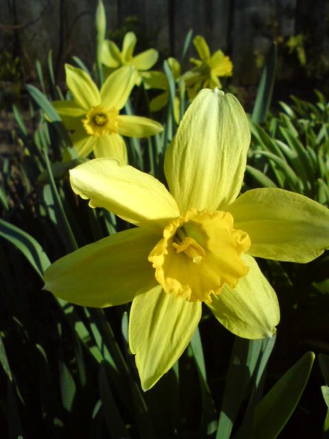 Flower by teru-teru-teru