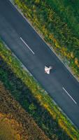 Bride - Drone Photography