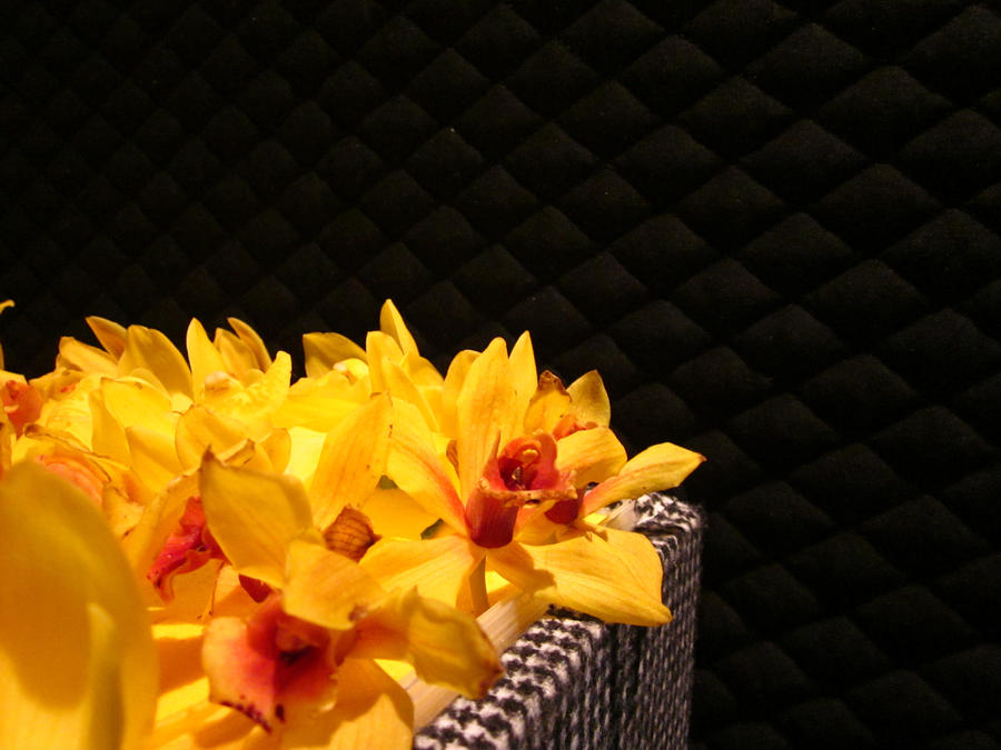 Boxed flowers by melintelinas