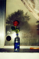 rainy rose by alittlemessi