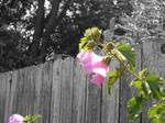 TN flowers