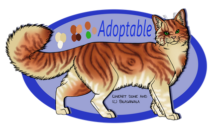 Adoptable - Red tabby Closed