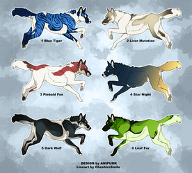 Adoptable - Canine OPEN