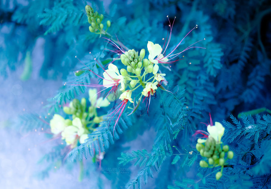 The Winter Flower by Hussain-Studio