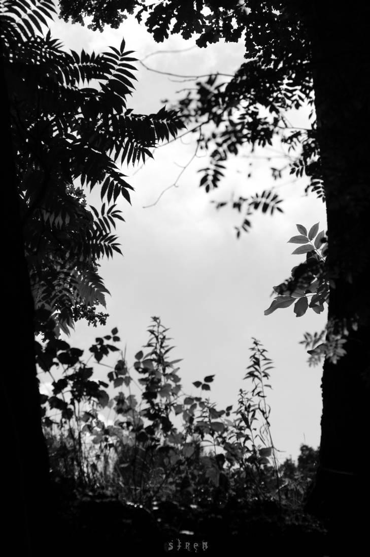 nature frame 2