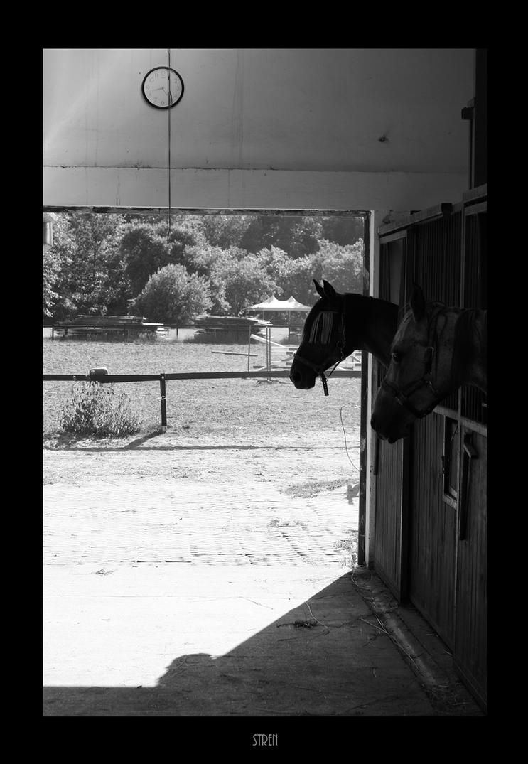 a stable by stren