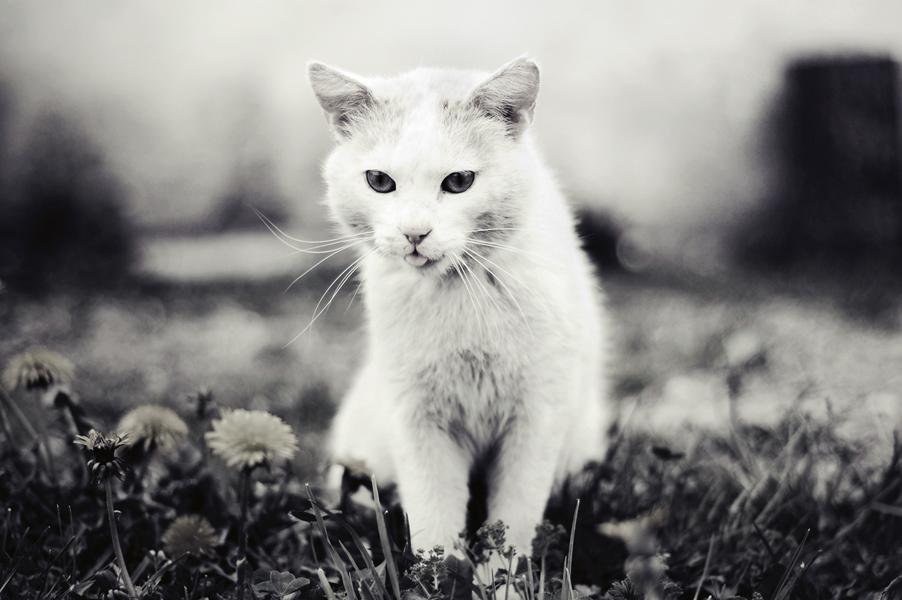 white kitty by lans-bejbe