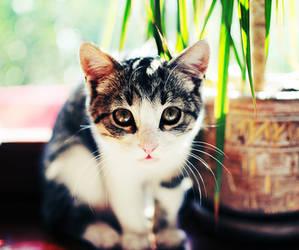 again kitty by lans-bejbe
