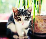 again kitty
