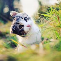 kitty 03 by lans-bejbe