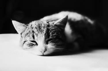sleeping cat by lans-bejbe