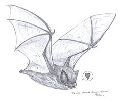+ Little brown bat + by x-Mlice