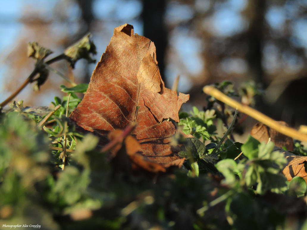 Do you feel like a small fallen leaf sometimes? by PhotographerAlexC