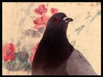 pigeon by elenista