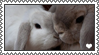 baby bunnies smooching - stamp by bunnylungs