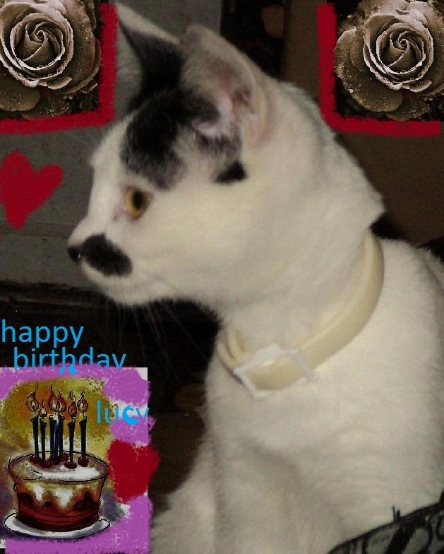 happy birthday lucy lulupoo