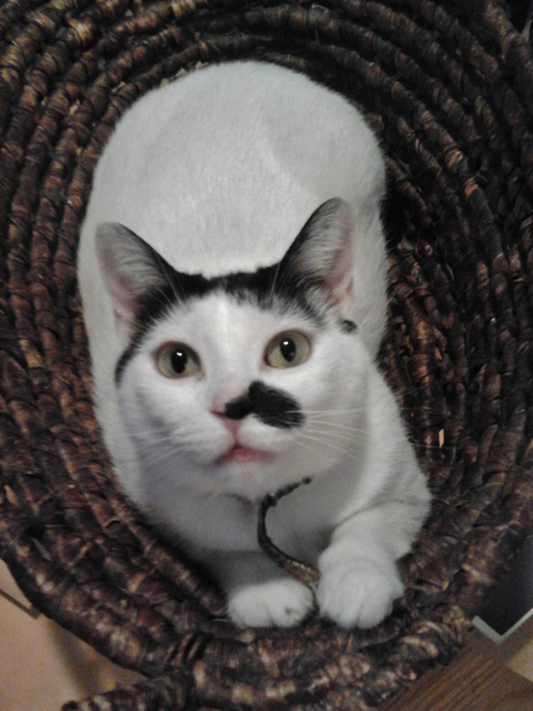 my basket my beautiful toni by analovecatdog
