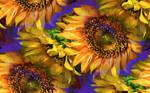 sunflower glory happy birthday patty