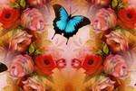 Beautiful-roses-and-butterfly