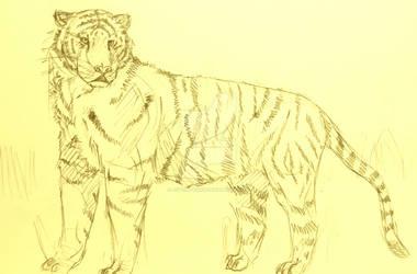 Tiger-practice