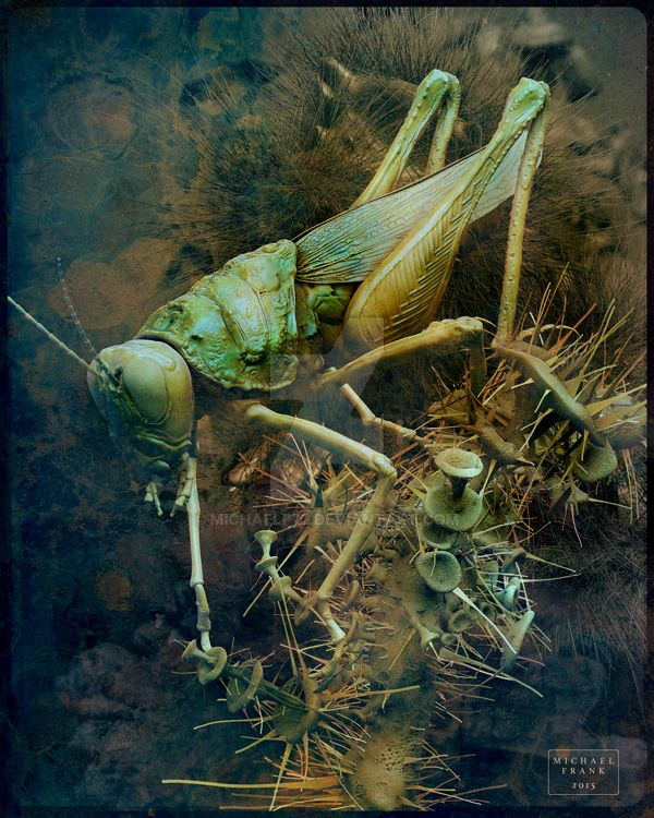 Another Grasshopper by MichaelF77