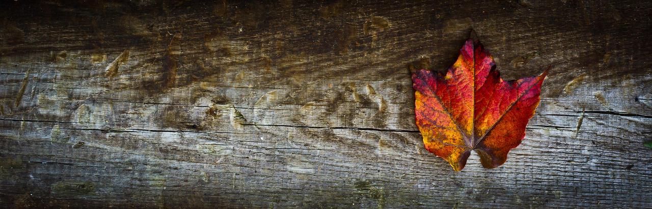 The colour of Autumn by kereszteslp