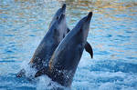 Dolphins at Seaworld 3 by daniellepowell82
