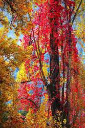 Autumn at Healsville 3 by daniellepowell82