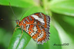 Butterfly at melb zoo 1
