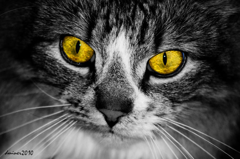 Cat Eyes by DanielleMiner