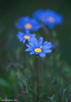 Blue Flowers by daniellepowell82