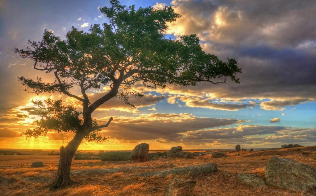 Dog Rocks Tree by daniellepowell82
