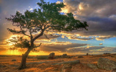 Dog Rocks Tree by daniellepowell82
