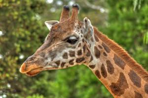 Giraffe by daniellepowell82