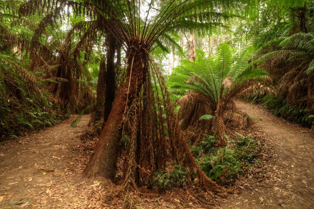 Otways Wilderness by DanielleMiner