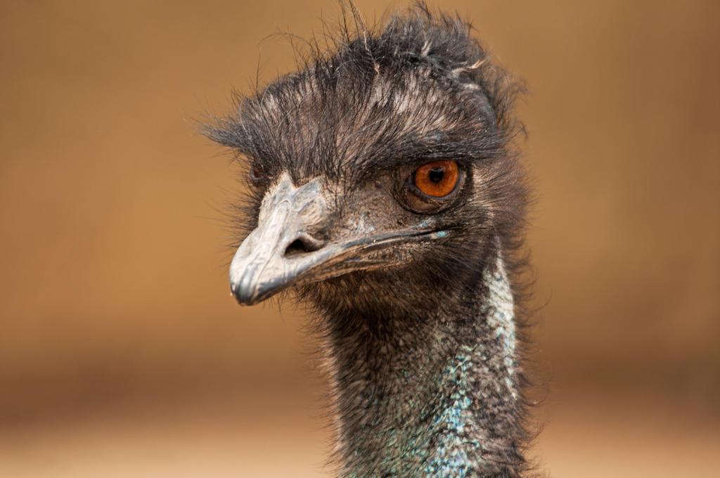 Emu by DanielleMiner