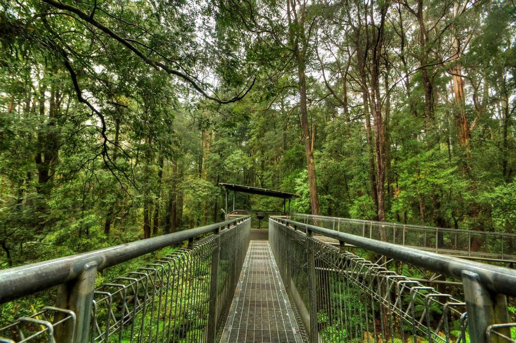 Otway Treetop Walk by DanielleMiner