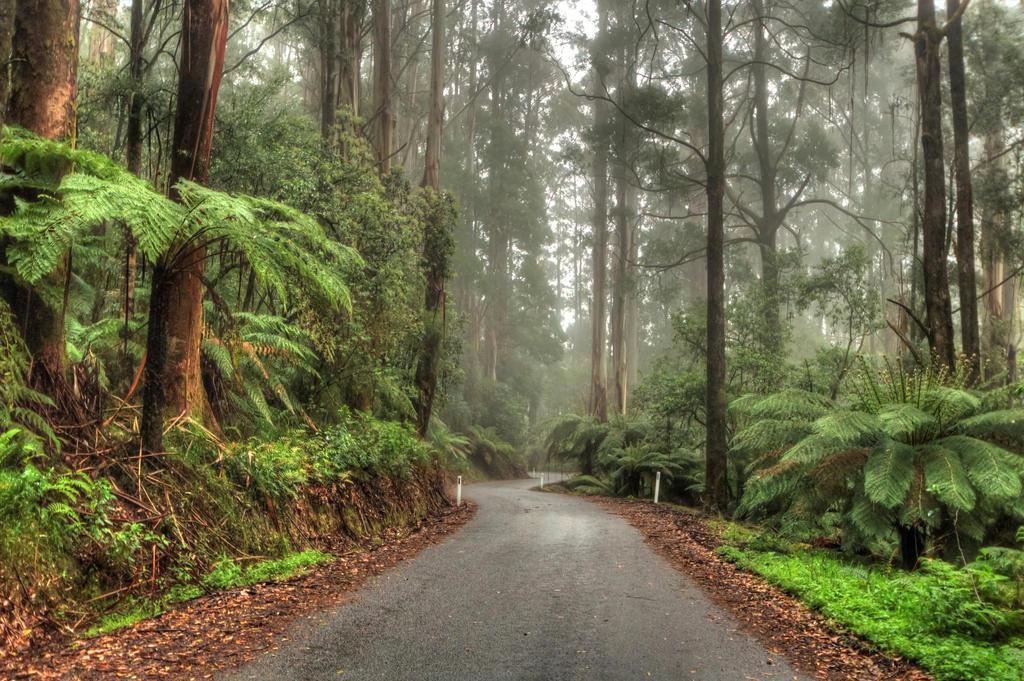 Otways Roads by DanielleMiner