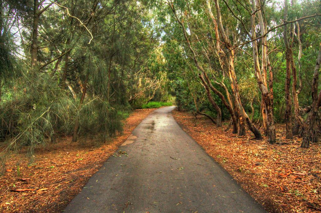 Barwon River Walking Track 2 by daniellepowell82