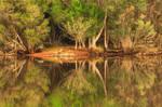 Serendip Reflections