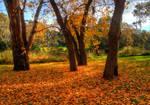 Barwon River Autumn 2