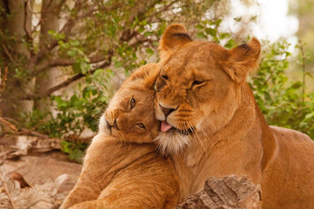 Motherhood by daniellepowell82